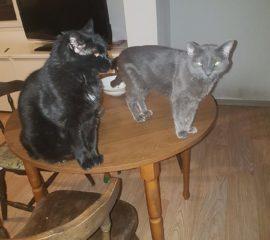 Minou et Ophelie