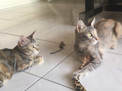 Paprika et Paloma