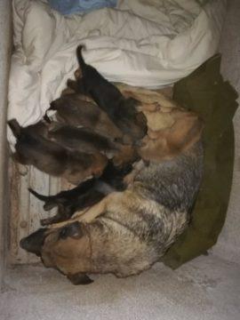 Pour Victoire et ses bébés