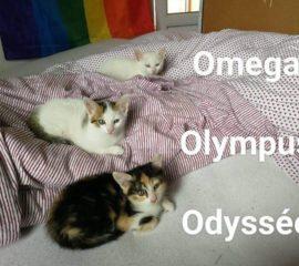 Odyssée et Omega