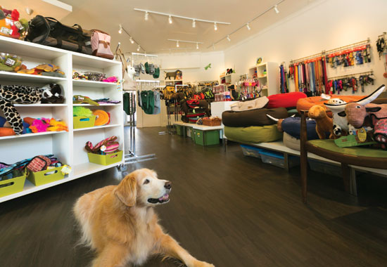 pet-store.jpg